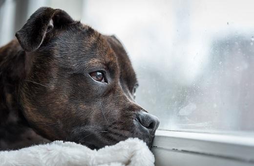 Tierschutz Tierliebe Hund