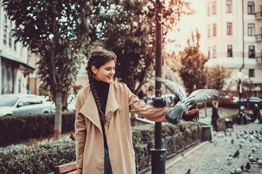 Tauben Tierschutz